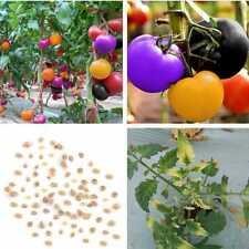 100X Regenbogen Tomate sät Bonsai frischen organischen Gemüse Samen Garten! X2V8