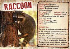 Raccoon, Mammal, United States Woods Wetlands etc. - Animal Information Postcard