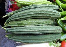 8 graines de LOOFAH éponge végétale (Luffa acutangula) SEEDS SAMEN SEMILLA SEMI