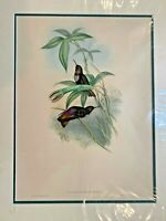 Original Hand Colored Lithograph Hummingbirds Gould Castelnaus Sunbeam