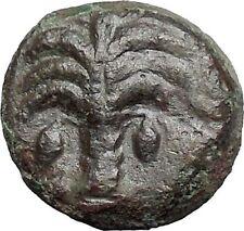 Carthage in Zeugitana 300BC RARE Ancient Greek Coin Horse Palm tree  i49204