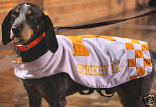 UT Tennessee Vols Smokey Mascot  Photo 19x13