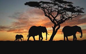 Home Art Wall Decor African elephants scenery Oil Painting Printed On Canvas