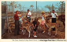 "PANAMA CITY BEACH FL 1962 The Deer Ranch @ Long Beach Resort ""OLD FLA"" ROADSIDE"