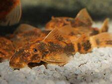 Pesci Vivi In Vendita Ebay