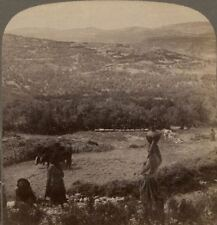 Palestine. Hill of Samaria Surrounded by Fig & Olive Groves Underwood Stereoview