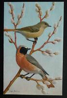 Beautiful Colourful Bird Postcard, Artist Signed Eugene Harding
