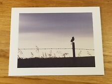 (1) Bird On Barbed Wire Fence matte photo notecard with envelope gift quality