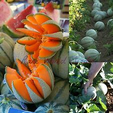 'MELON De CAVAILLON' simply: the best melon/cantaloupe in the world..! SEEDS.
