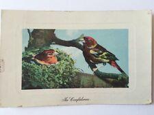 Vintage Postcard- Animals - In Confidence - 1908