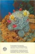 Postcard cactus flower chirilic writing