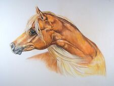 Gorgeous Palomino Arabian Horse Orig. VTG Colored Pencil Drawing Head Study
