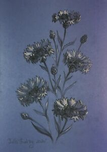 Cornflower flowers  Pencil and white pastel  original sketch drawing A4 format