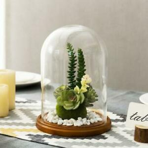 7-Inch Clear Glass Cloche Dome Display w/ Rustic Wood Base, Plants, Jewelry