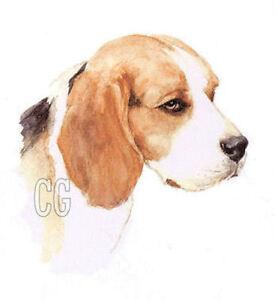 BEAGLE.          Blank Dog greeting card by Christine Groves