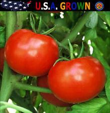 Rutger's Tomato Seeds (100 Seeds) Non-Gmo Heirloom Gardening