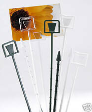 100 OASIS CLEAR FLORIST CARDETTES - FOR HOLDING GIFT CARDS & PRICING