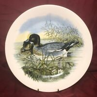 Royal Kent~The Wildfowl Series No 3 Widgeon by John Gould Decorator Plate