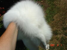Arctic fox pelt hide pro tanned white fur soft leather gorgeous skin last one.