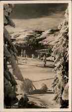NORWEGEN Norge Topographie ~1930/40 Verschneite Landschaft Botanik Pflanzen Baum