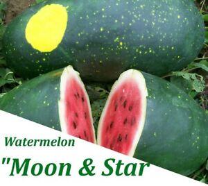 Rare Watermelon Seeds - 15 Moon & Star Vegetable Fruit Seed Hybrid Watermelon