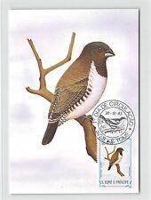 S.TOME MK 1983 VÖGEL KLEINELSTERCHEN BIRDS CARTE MAXIMUM CARD MC CM m282/