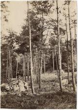 Lot de 4 Photos Albuminés Forêt de Fontainebleau Seine et Marne Vers 1880/90
