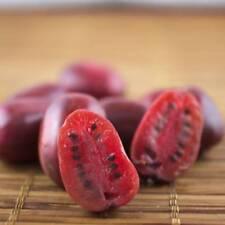 RARE 5 graines de KIWI ROUGE(Actinidia purpurea)T97  RED KIWI SEEDS SAMEN SEMI
