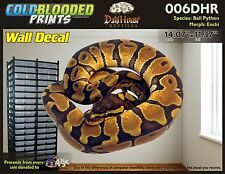 Removeable Wall Decal Snake Ball Python Cold Blooded Prints Sticker 006DHR
