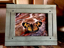 Framed Butterfly Photo Turquoise Wood Frame 5x7 Butterflies