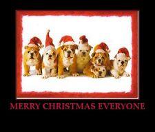 "Bull dog Christmas    refrigerator magnet 3 1/2x 3 1/2"""