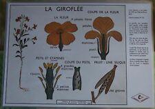 Création Affiche scolaire Set de Table Rossignol la Giroflée Format A3