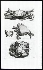 Antique Print-PAGURUS-SPOTTED MOON CRAB-Rumphius-Maria Sybilla Merian-1741