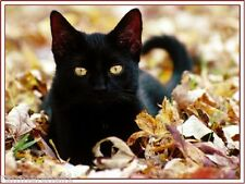 4Pack Autumn Black Cat Cats Kitten Kittens Note Stationery Notecards/ Envelopes