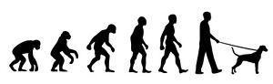 Dalmatian Dog Walker 'Evolution' car sticker, vinyl decal