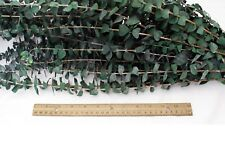Preserved Fragrant Baby Eucalyptus Branches  8 oz