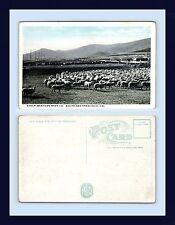 CALIFORNIA SOUTH SAN FRANCISCO SHEEP AT WESTERN MEAT CO. WHITE BORDER CIRCA 1920