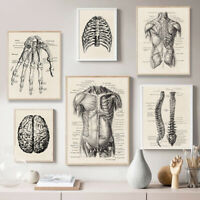 Human Anatomy Artwork Medical Wall Picture Muscle Skeleton Vintage Poster Print