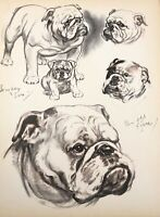Diana Thorne's Dogs 1944 English Bulldog Lithograph Print Portrait