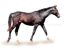 Composition photo cheval Nature Animal Élégant Imprimé Cool rapide Poster bmp10105