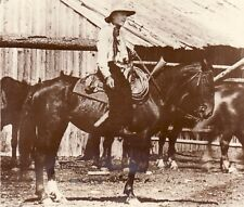 William M. Jardine Big Hole Basin Horse Secretary of agriculture old Photo 1920'