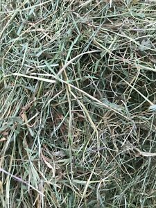 Natural Welsh Meadow Hay -  Perfect for Horses/small animals - Feed and Bedding