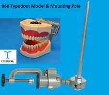 Dental Typodont Model 860 works with Columbia brand teeth & Mounting Pole
