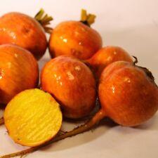 Pack Vegetable Seed Golden Beetroot 'Boldor F1' King's Seeds