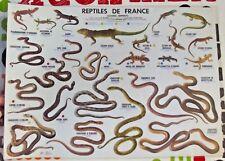 Affiche Scolaire set de table Couleuvre Vipère aspic Orsini Lézard Gecko Orvet
