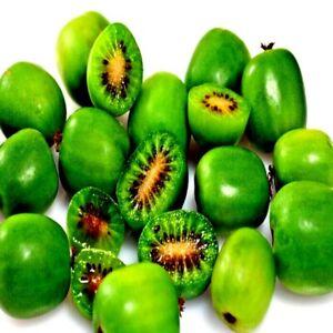 50 Issai Kiwi Berry Seeds Arctic Grape Fruit Exotic Tropical Plant Hardy Vine