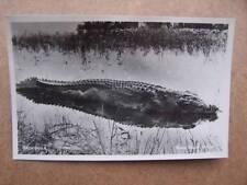 Big Game Safari Africa Crocodile
