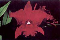 (fuv) Postcard: Orchids