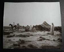 rare antique old PHOTO LEROUX CAMELS Muslim camp tents AFRICA  ALGERIA ALGER