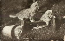 Cute Kittens Play on Lawnmower c1910 Postcard